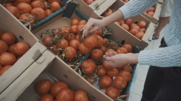Selects the tomatoes on the market
