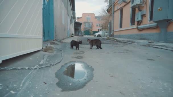 Macskák civakodnak egymással az óváros udvarán. Macskák szétszóródnak a rémülettől.