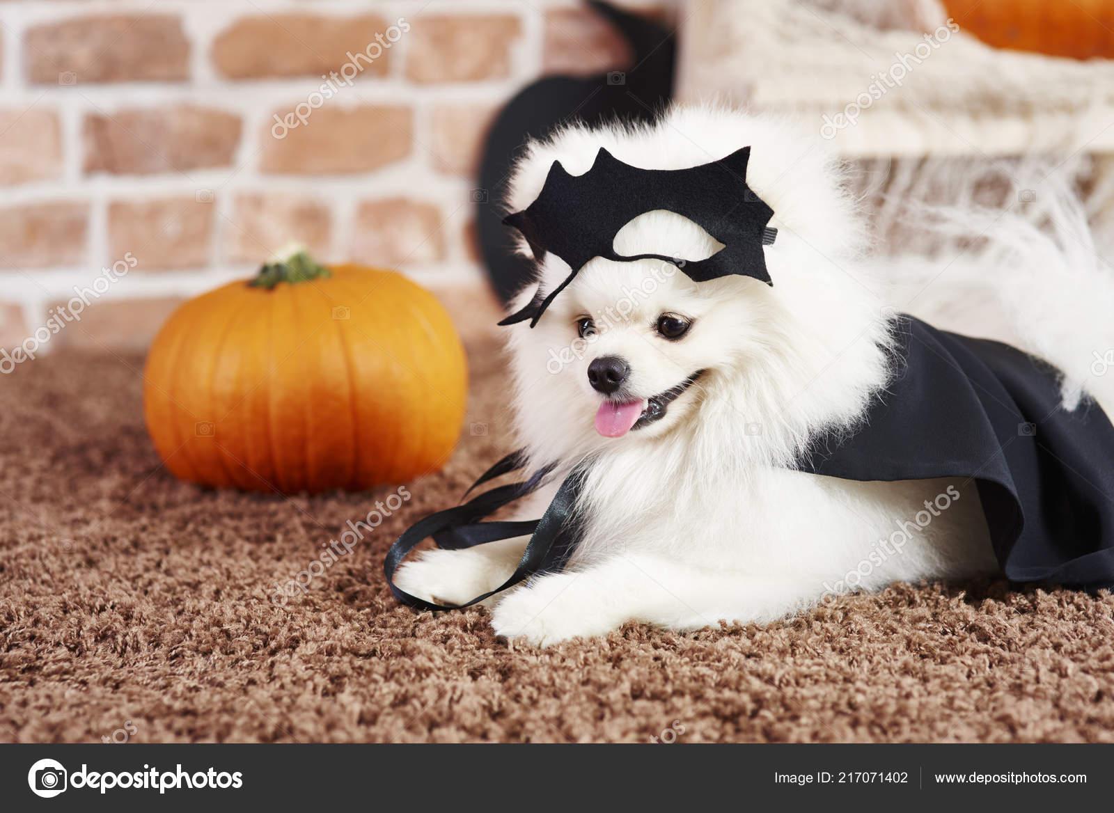 Cute Puppy Halloween Costume Stock Photo Gpointstudio 217071402
