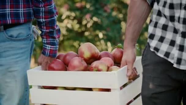 Zblízka dva muži nesoucí plnou bednu jablek
