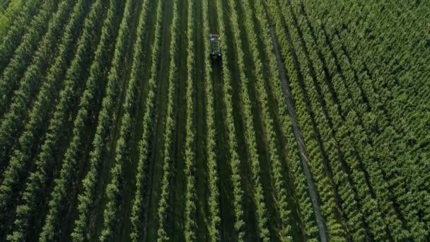 Az almás gyümölcsösök és a mezőgazdasági termelők légi kilátása almaszedésre