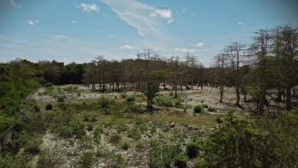 Video from drone forests with a lot of plastic debris and protective masks lying on the ground