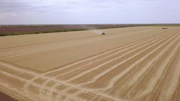 Large golden field. The combine harvests wheat. Aerial View