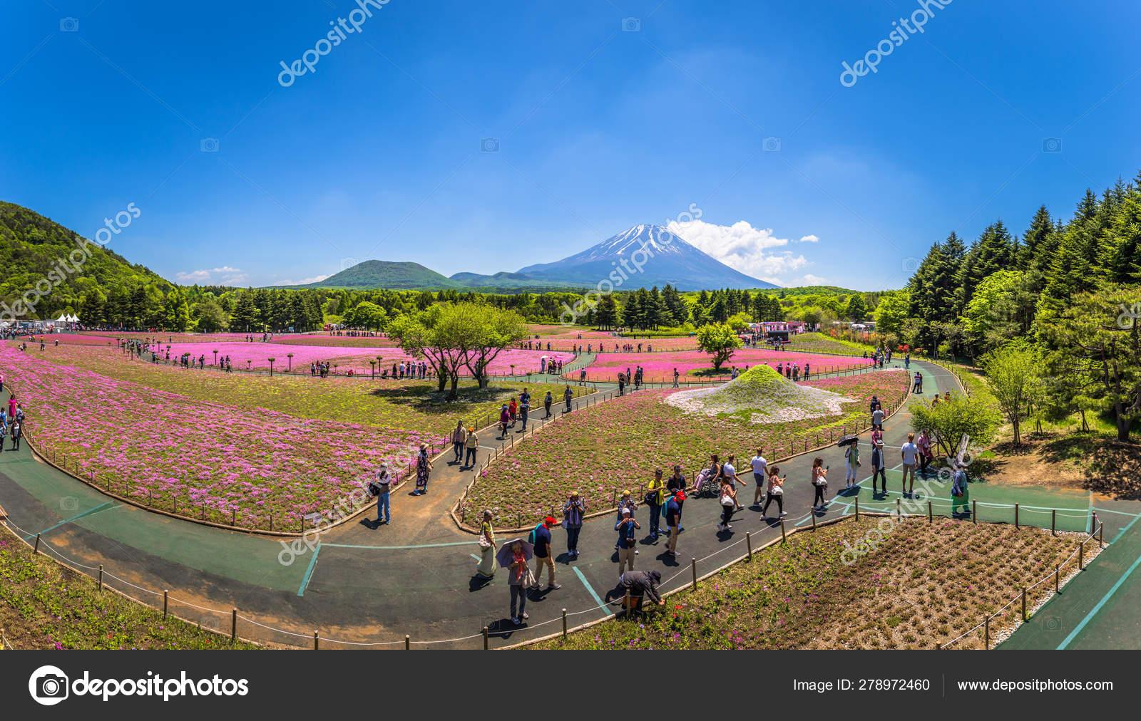 Motosu - May 24, 2019: Mount Fuji seen from the Shiba-Sakura
