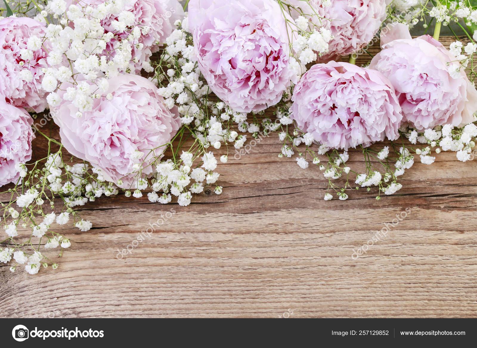 Pink Peonies White Ranunculus Flower And Gypsophila Paniculata Stock Photo C Agneskantaruk 257129852