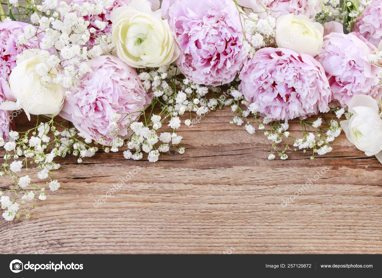 Pink Peonies White Ranunculus Flower And Gypsophila Paniculata Stock Photo C Agneskantaruk 257129872