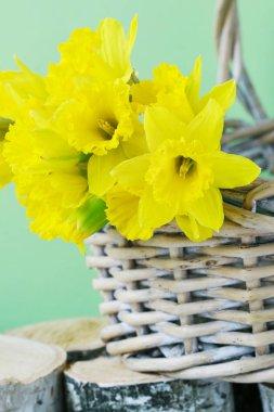 Yellow daffodil flowers in a wicker basket.