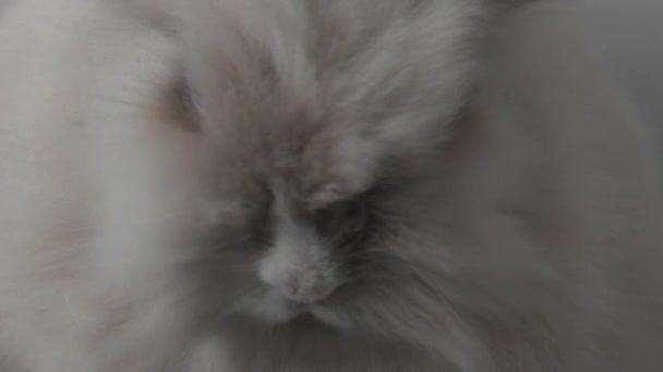 Charming bunny on the floor.