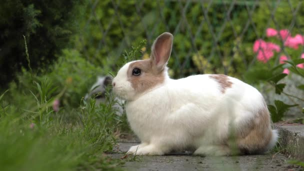 das charmante Kaninchen. grünes Gras im Garten. 4k, uhd, 50p, 60p, Schwenken, Nahaufnahme,