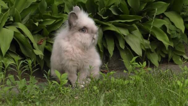 The charming rabbit. Green grass in the garden. 4K, UHD, 50p,60p,Panning,Closeup,