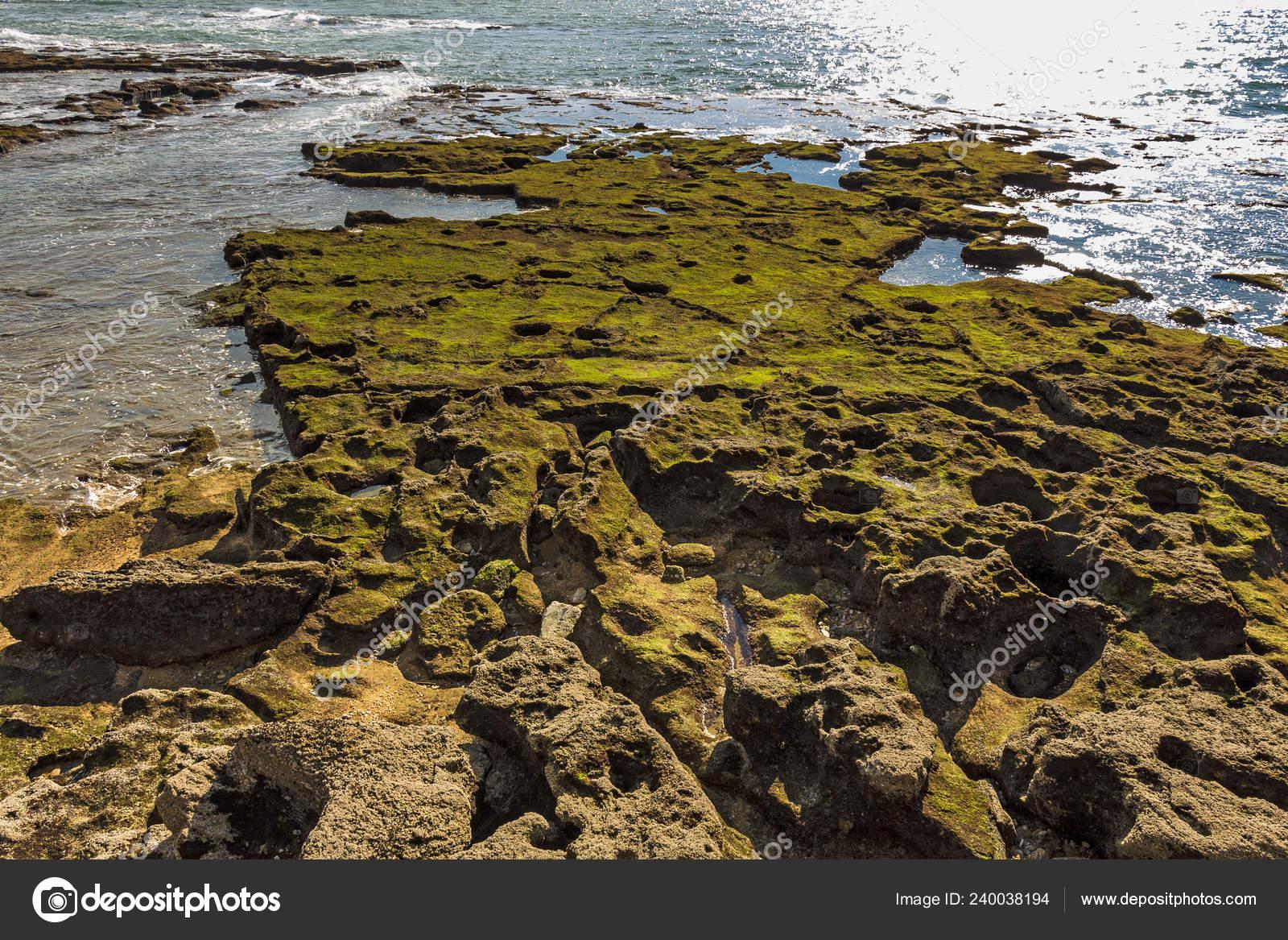 Moss Covered Rocks Shores Bay Cadiz Stock Photo C Juliachan