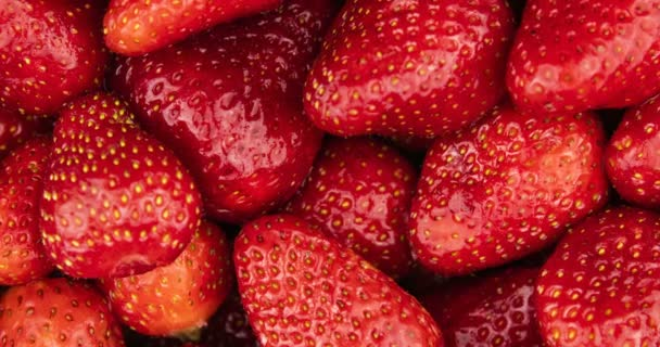 Rotace červených zralých organických jahod. Potravinové pozadí