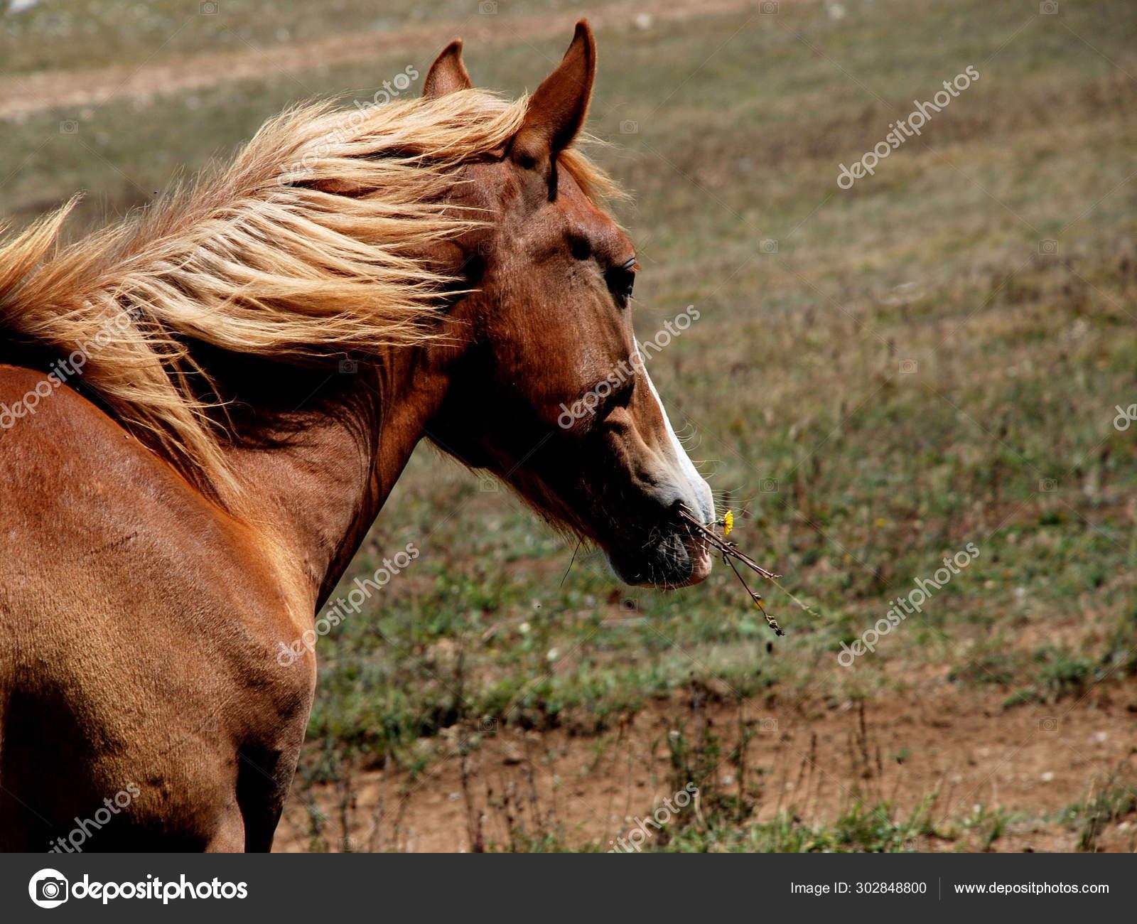 Wild Beautiful Horse Face Stock Photo C Mahzuza 302848800