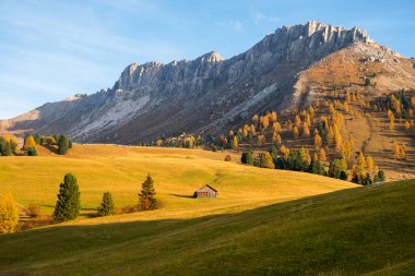 Beautiful autumn colors at the foot of the Odle Mountains  at sunset in the Dolomites, Trentino Alto Adige, Val di Funes Valley, South Tyrol in Italy