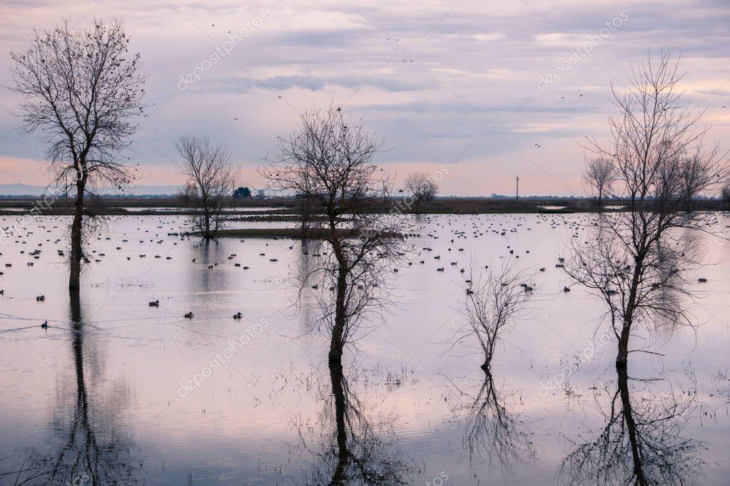 Sunset view over the marshes of Llano Seco Unit wildlife refuge, Sacramento National Wildlife Refuge, California