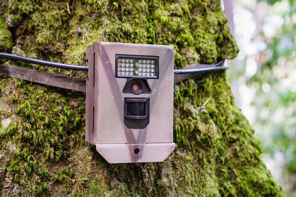 Wildlife monitoring device strapped on the base of a tree trunk, Santa Cruz mountains, San Francisco bay area, California