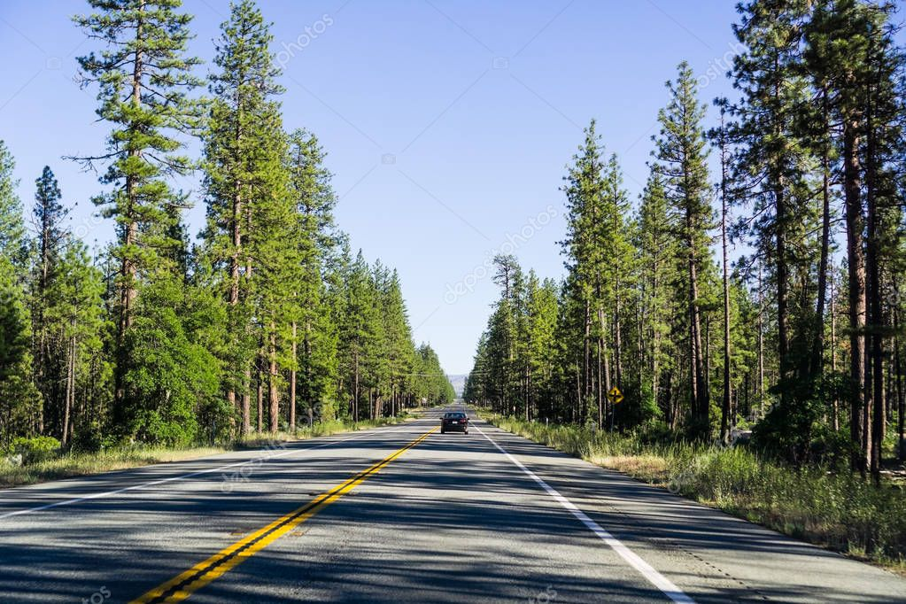 Driving through Shasta National Forest in Northern California; evergreen trees line up the highway and cast long afternoon shadows on the road
