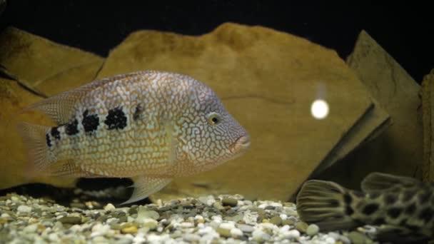 Aquarienfische im aquarium