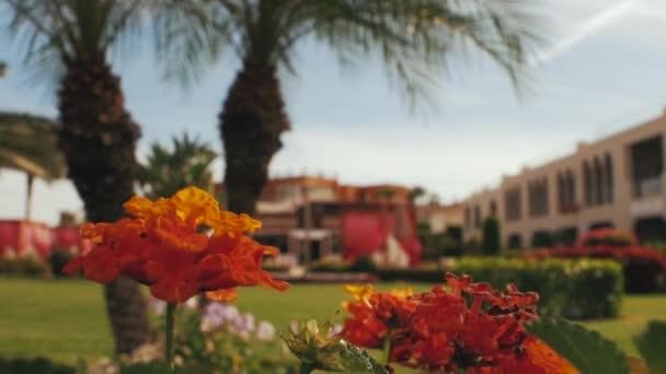 oranžové květy na pozadí palem