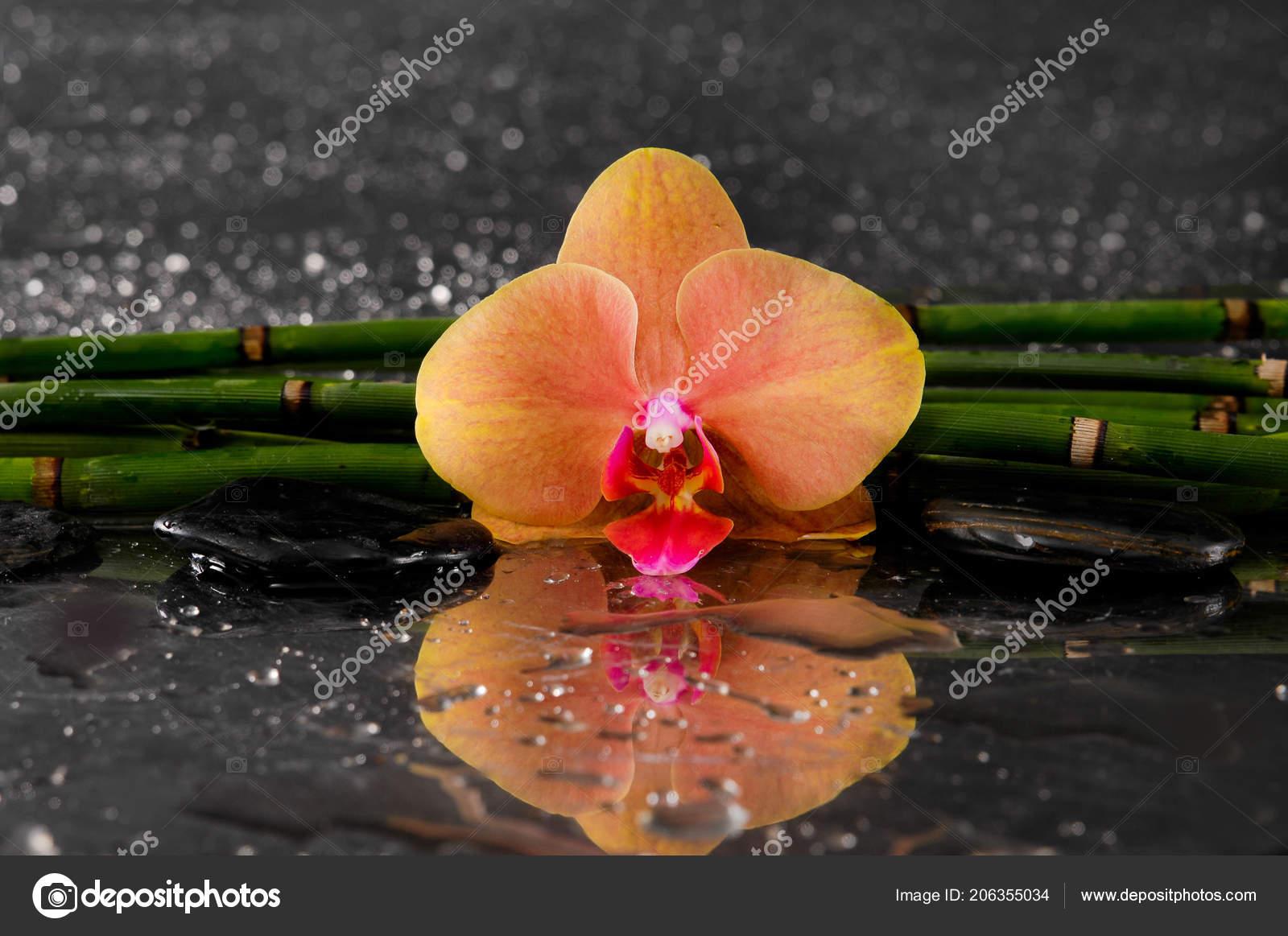 Spa Concept Orange Orchidee Mit Dunnen Bambushain Stockfoto