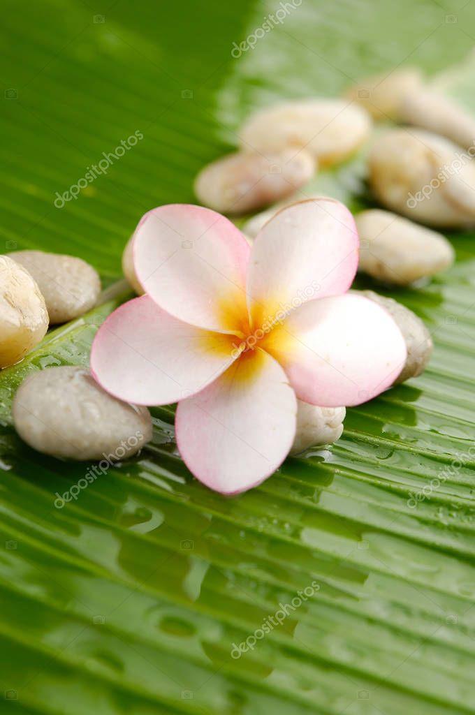 Set of Pink frangipani and stones on banana leaf
