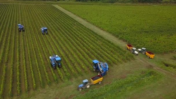 Francie, Gironde, září, 26-2019, Mechanická sklizeň se čtyřmi stroji na prodej, Aoc Bordeaux, Vineyard Bordelais, Gironde, Aquitaine
