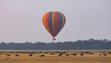 """Картина, постер, плакат, фотообои """"Большой цветной шар с милый слонов на красивом фоне"""", артикул 234401268"""