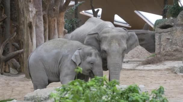 Juvenilní slon mazlení dále k matce slon
