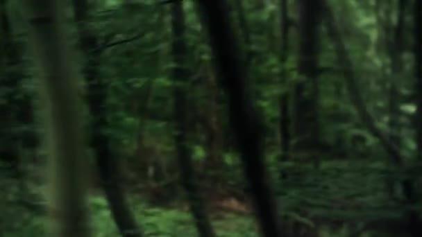 Zelený Les Olistený zobrazení 2