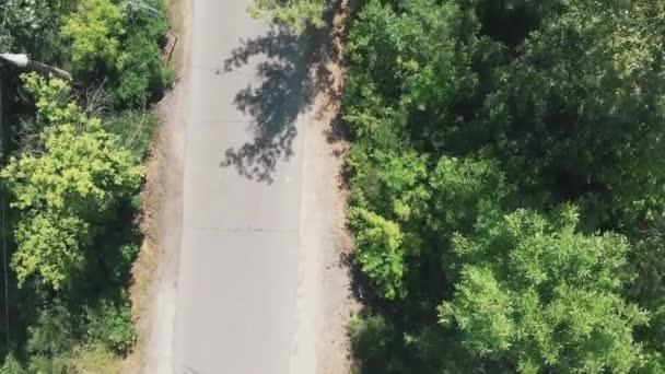 Aerial view of green city park. Drone flies through big green trees. Truhanov island