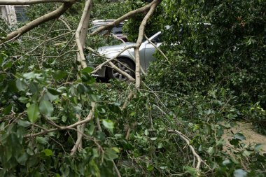 Broken tree fallen on top of parking car, damaged car after super typhoon Mangkhut in China