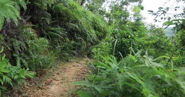 Ženská Ultra maraton, běžec na tropickém deštním lese