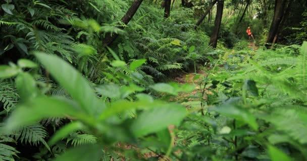Woman ultra marathon runner running on tropical rainforest trail