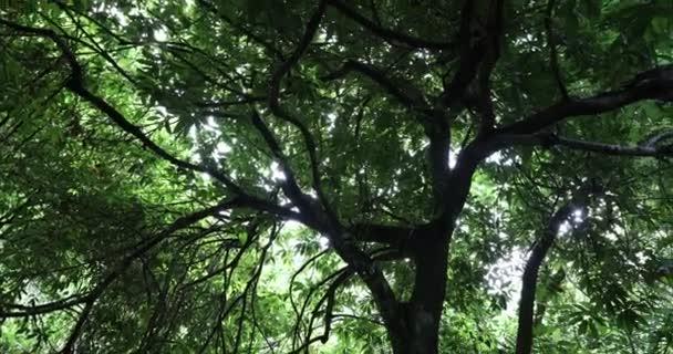 Gyönyörű fák örökzöld erdőben a hegyekben