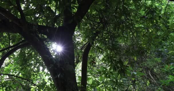 krásné stromy ve věčně zeleném lese v horách
