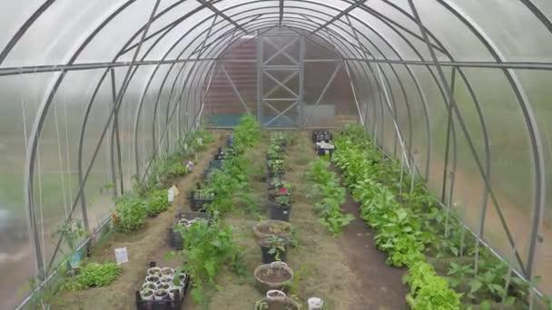 az üvegházhatást okozó gyümölcsök és zöldségek belsejében