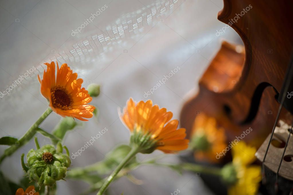 Horizontal image of  a violin and flowers close up on windows background.