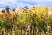 Prérijní krajina s divokými vysokými travinami, podzimními loukami a jasně modrou oblohou s bílými mraky.