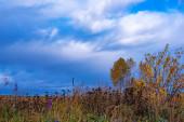 Prérijní krajina s travinami, loukami, stromy a jasně modrou oblohou s bílými mraky. Divoké pole trávy při západu slunce, měkké sluneční paprsky, teplé tóny, světlice čočky, mělké DOF