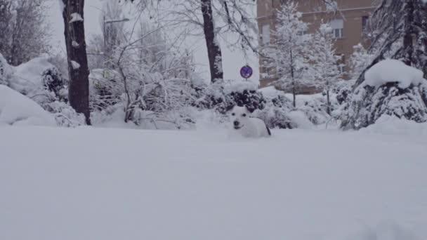 Jack russell terrier kutya játszott hó kiskutya boldog vidám
