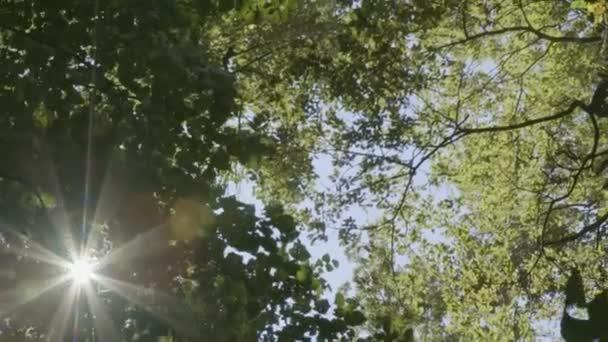 Sluneční erupce koryta listy v lesoparku zelených stromů letní ráno