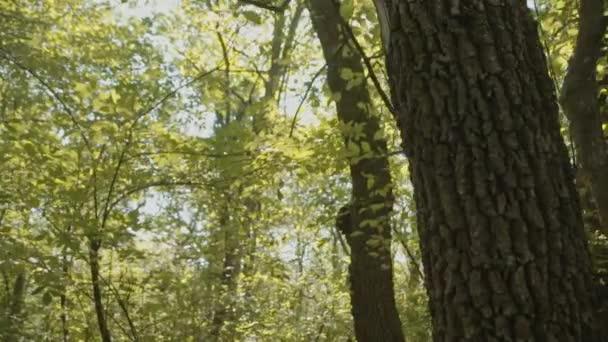 Sun trapéznadrág vályú levelek erdő zöld fák nyári reggel Park