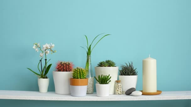 Modern room decoration with frame mockup. White shelf against pastel turquoise wall with Collection of various cactus and succulent plants in different pots. Hand inserting picture frame.