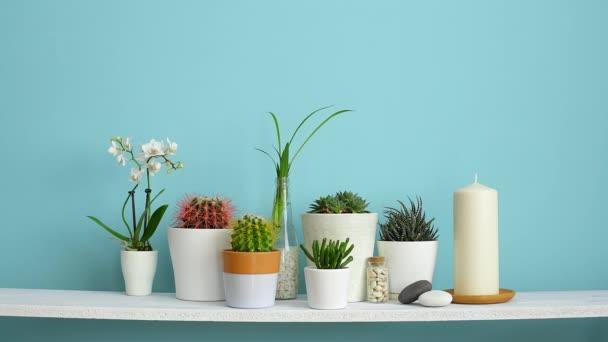 Moderní dekorace pokojů s rámu. Bílá police proti pastelové tyrkysové stěně s kolekcí různých kaktusů a šťavnaté rostliny v různých hrncích. Vložit rámeček obrázku ručně.