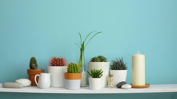 Modern terem dekoráció, képkeret. Fehér polc a pasztell türkiz fal ellen gyűjteménye különböző kaktusz és szukkulens növények különböző cserépben. A kéz öntözés.