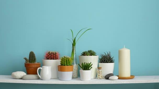 Decorazione moderna della camera con cornice dimmagine mockup. Mensola bianca contro parete turchese pastello con Collezione di vari cactus e piante succulente in diversi vasi. La mano li sta annaffiando.