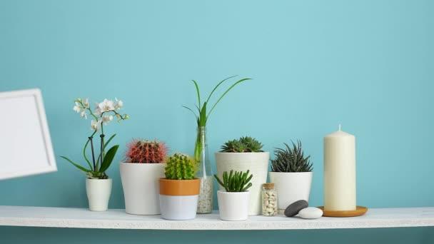 Decorazione moderna della camera con cornice mockup. Mensola bianca contro parete turchese pastello con Collezione di vari cactus e piante succulente in diversi vasi. Inserimento a mano della cornice.