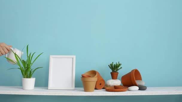 Moderní výzdoba pokojů s obrázkem rámu. Bílá police proti pastelové tyrkysové stěně s keramickými a šťavnaté rostlinnou. Ručně zavlažované pavoučí rostliny.