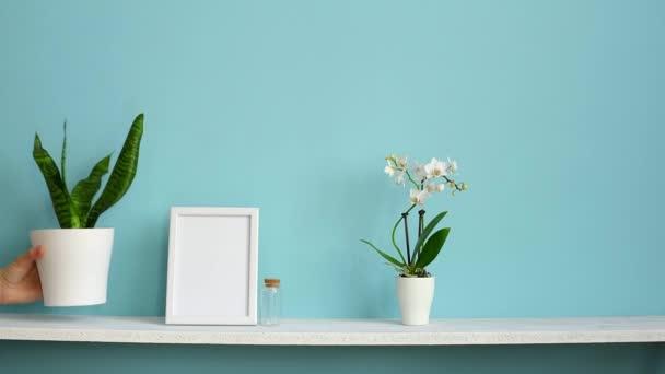 Moderní výzdoba pokojů s obrázkem rámu. Bílá Polička proti pastelové tyrkysové stěně se svou orchidejí a ručně vkládané hadí rostliny.