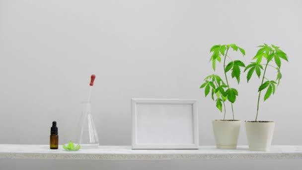 Moderní výzdoba pokojů s obrázkem rámu. Bílá police proti stěně s ručním položením skleněné kapičky s CBD olejem. Je tam marihuana z květináč. CBD zdravotní koncepce.